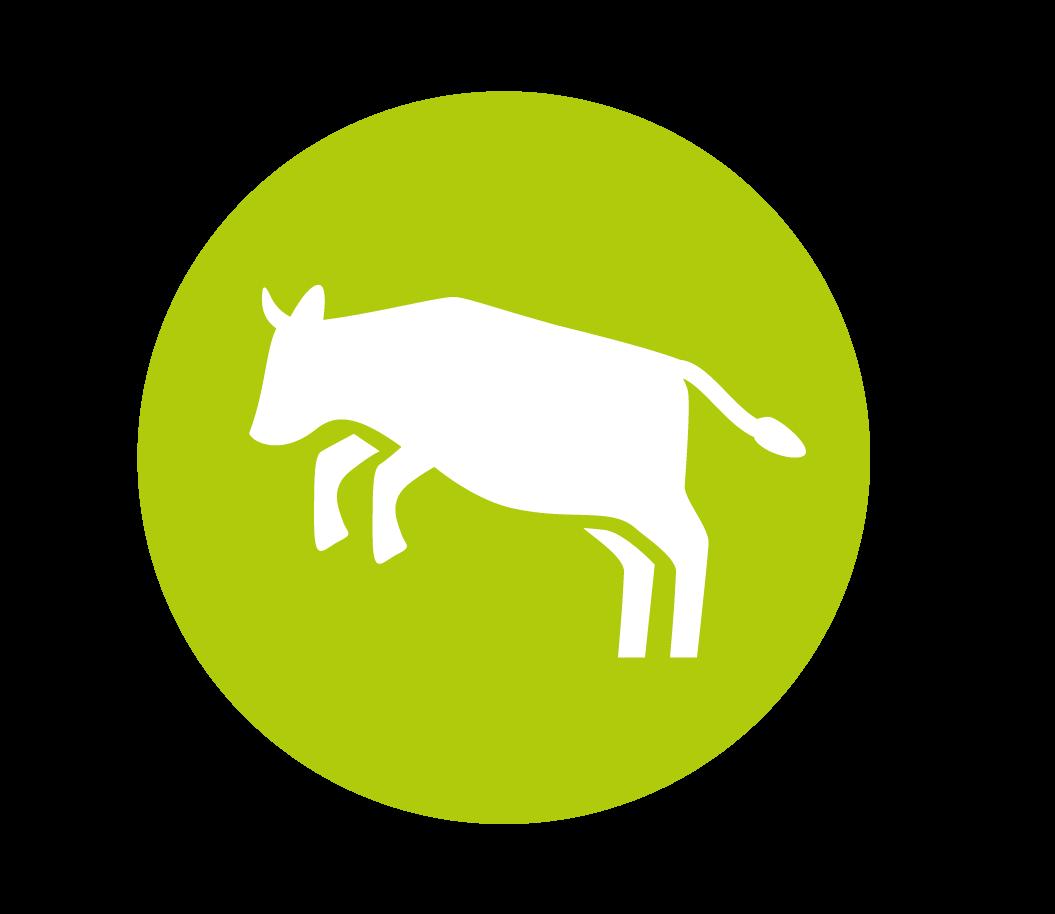 Healthier dairy cows
